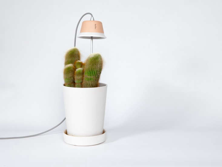 a three spot led and other finds in\10 easy pieces: grow lights for indoor pl 9