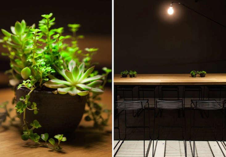 cosme remodelista succulents 14