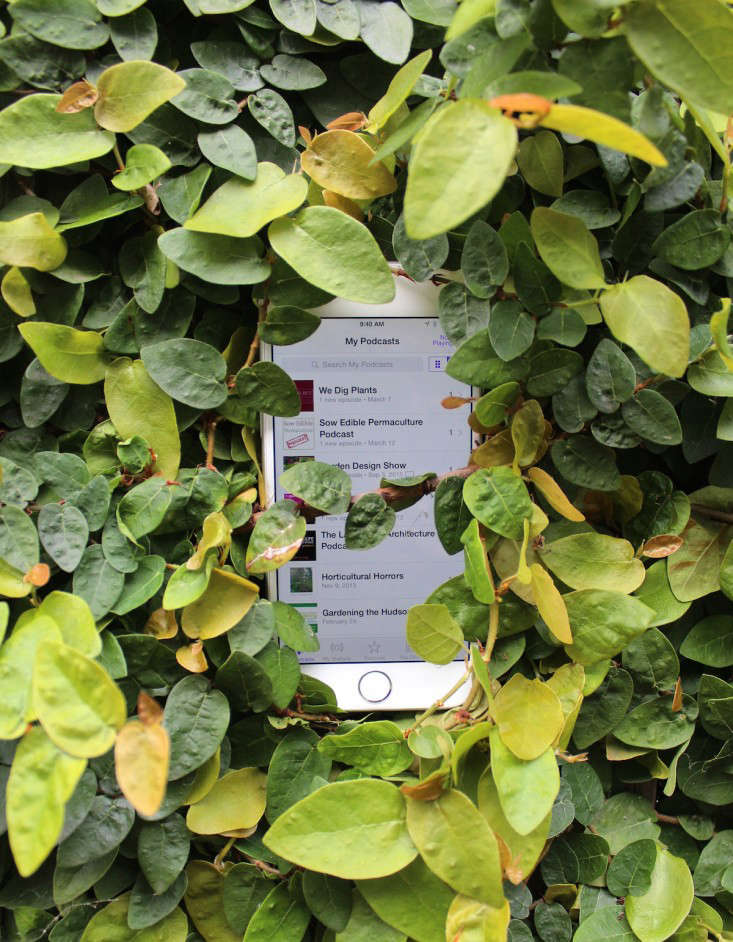 hear itthrough the grapevine:the 8 best garden podcasts to listen to now. p 10