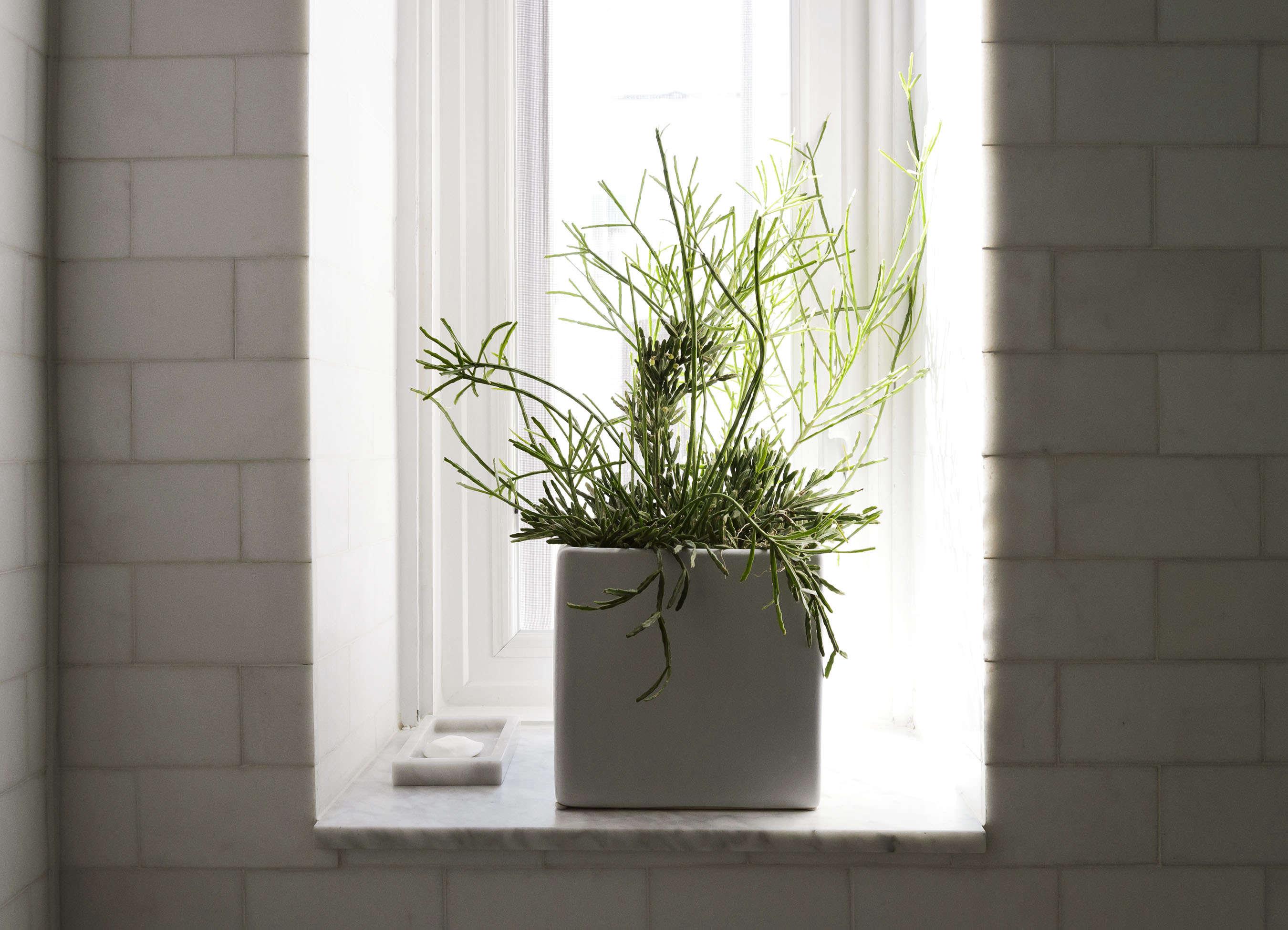 Plant on bathroom windowsill in Jacqueline-Schmidt and David Friedlander's 675-square-foot Brooklyn quarters, Matthew-Williams-photo | Remodelista