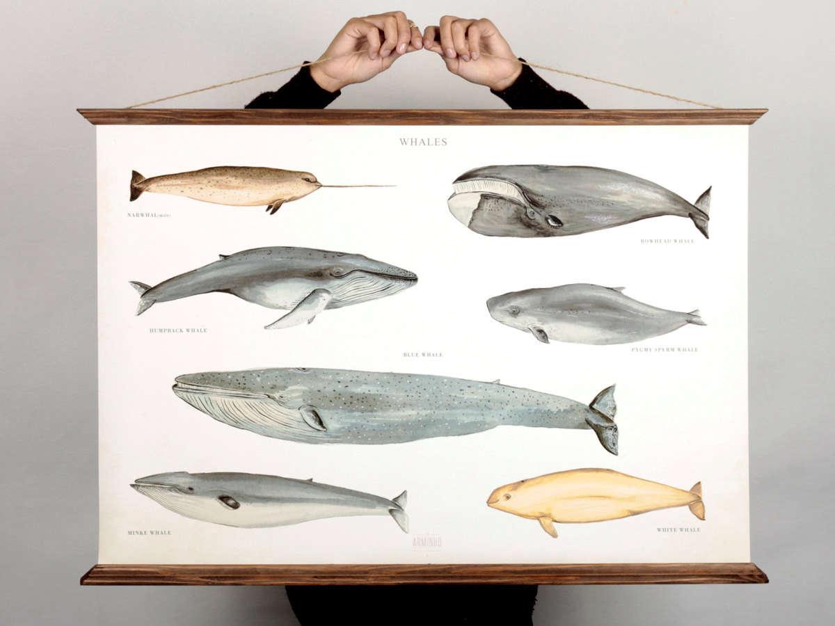 arminho portugal design studio whale poster 10