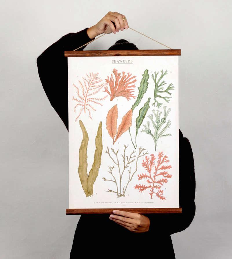 arminho seaweed poster 13