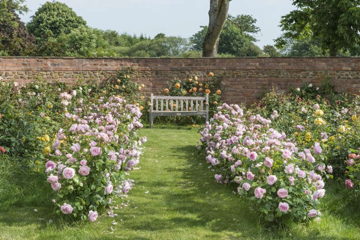 first, a walk through the ultimate english rose garden, cultivated by &#8\2 9