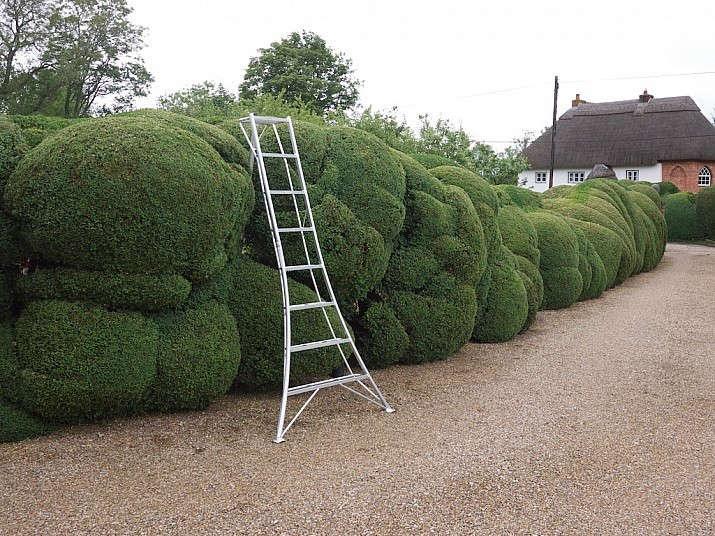 cloud pruning boxwood gardenista 12