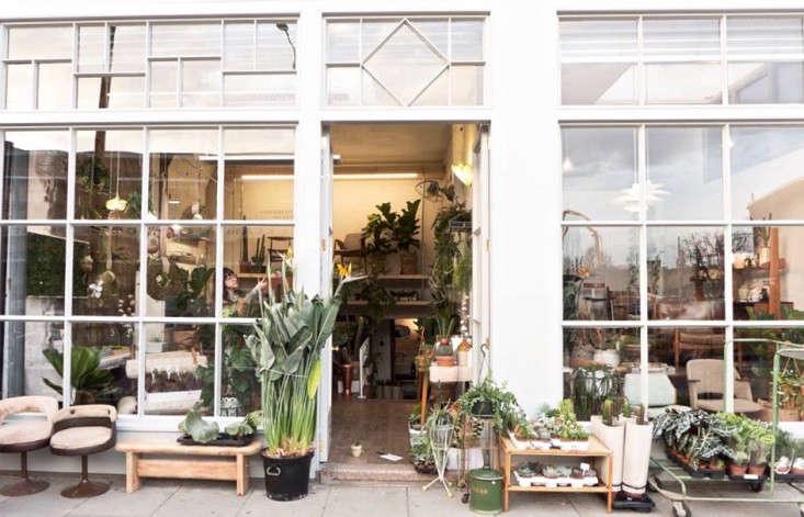 conservatory archives london houseplant house plants shop gardenista e146833374 10