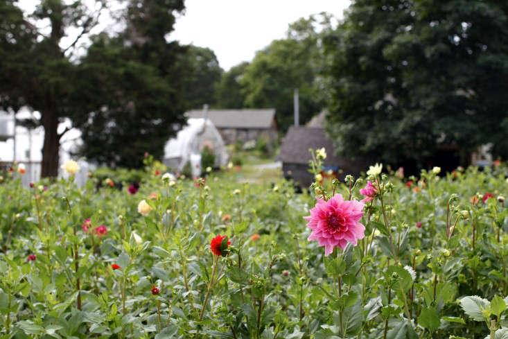 robin hollow farm by christine chitnis 11