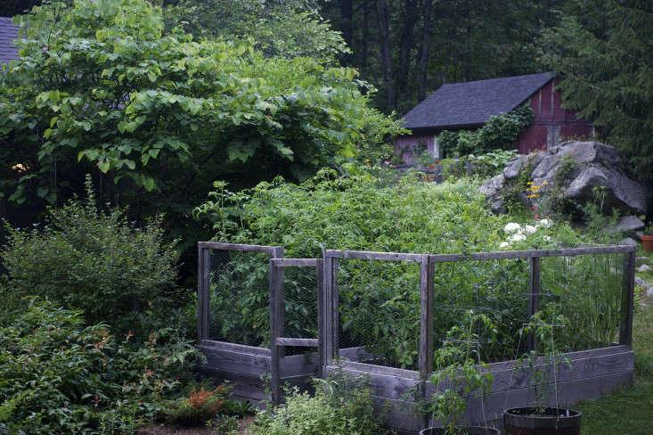 fried green tomatoes garden 11