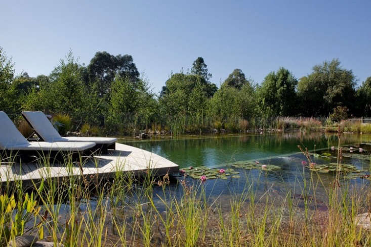 the latest, most refreshing take on the swimming pool? naturally filtered pools 11