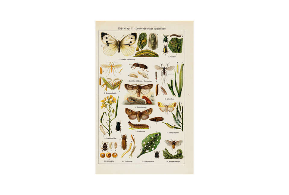 Scientific Illustration Insects Chart