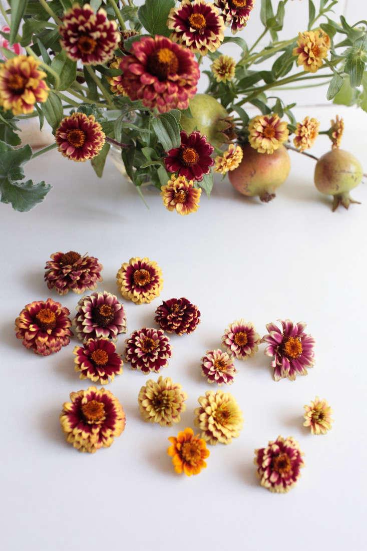 zinnias-sophia-moreno-bunge-gardenista-8-e1472742951309