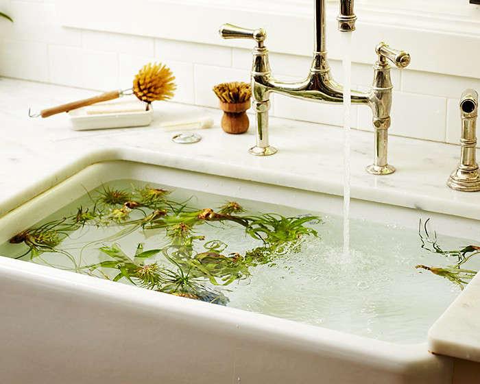 air plants tillandsias sink faucet brush marble kitchen gardenista 1 10