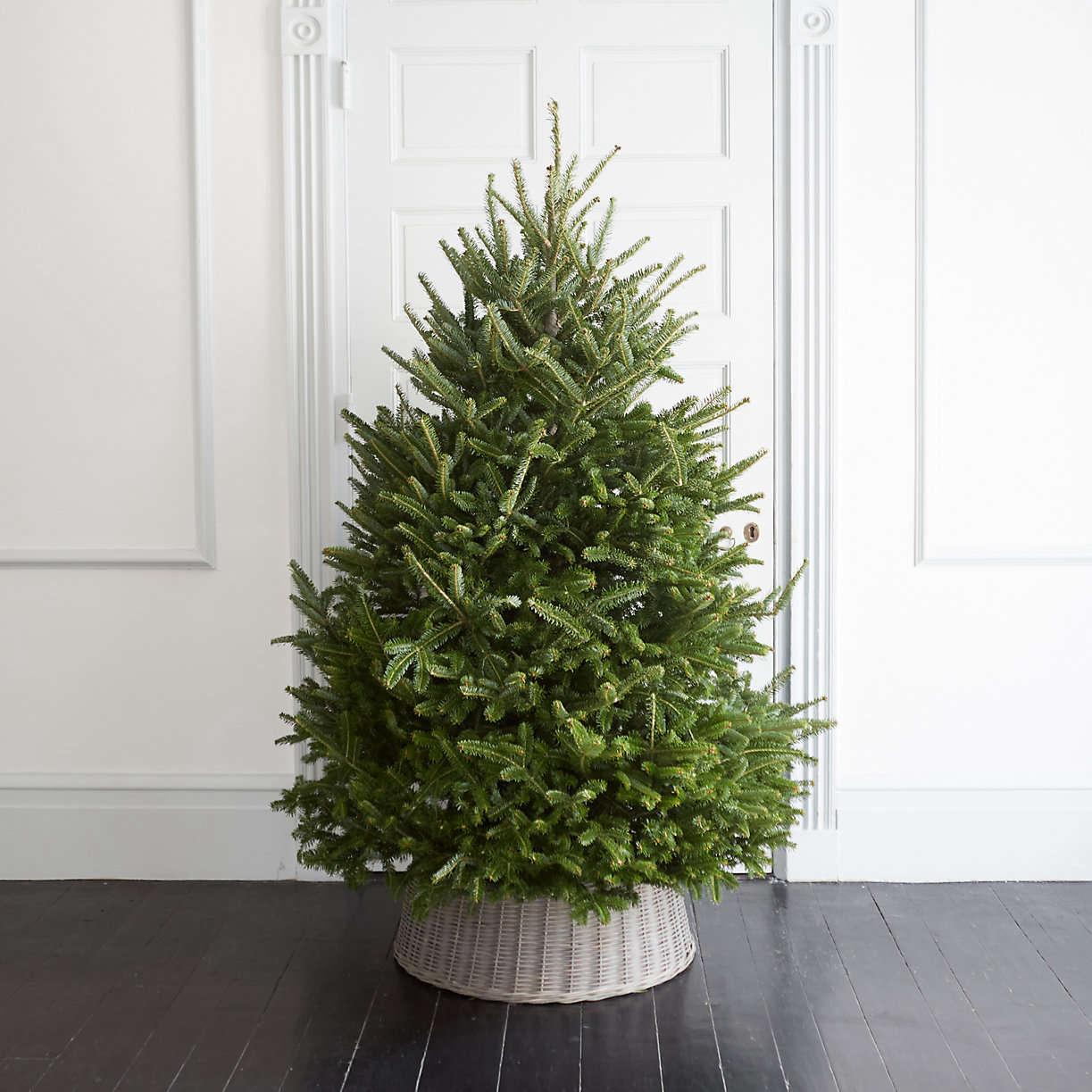 fresh-cut-fraser-fir-christmas-tree-from-terrain
