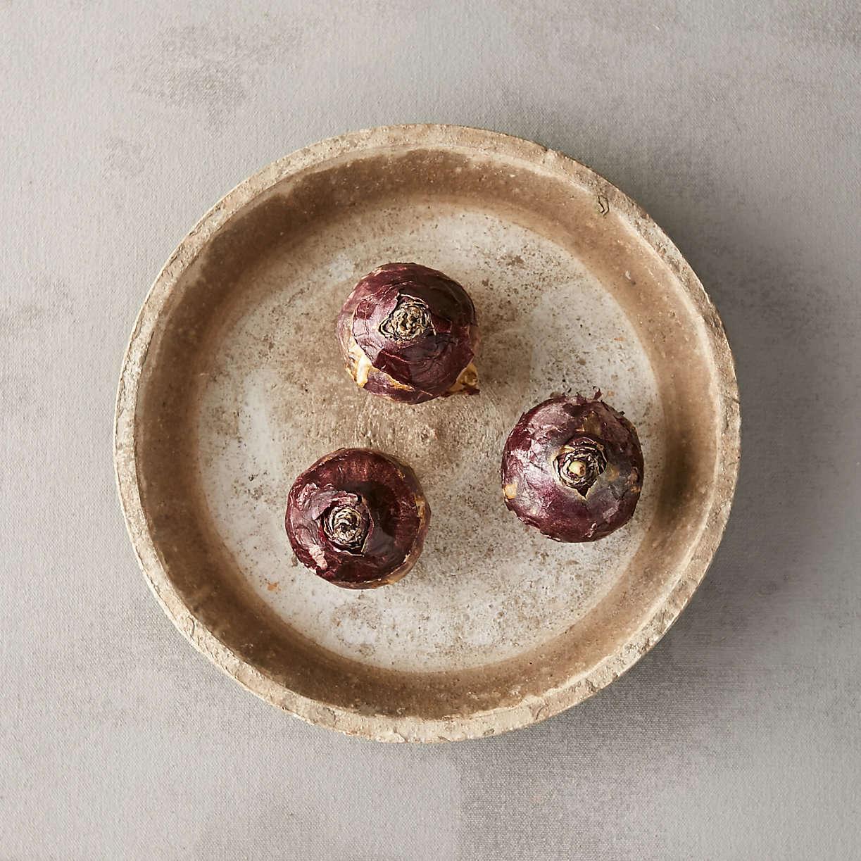 hyacinth-delft-blue-bulbs-from-terrain-in-dish