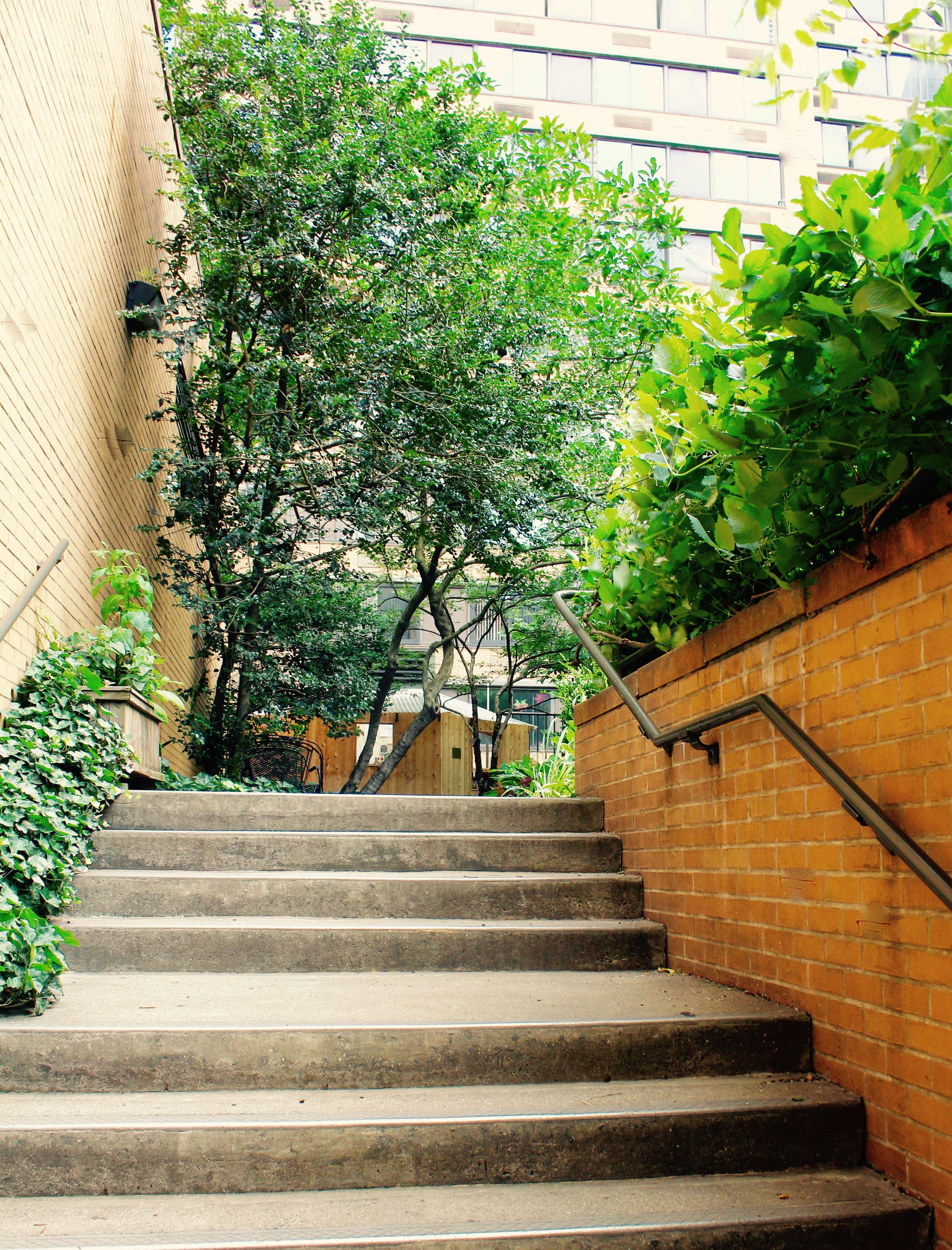 lotus garden stairway by monica willis 13