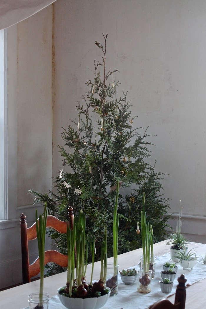 diy live christmas tree 15