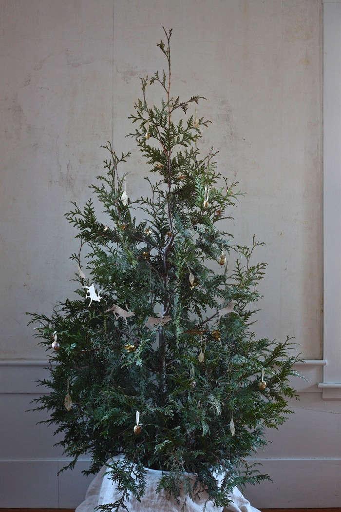 diy live christmas tree thuja 10
