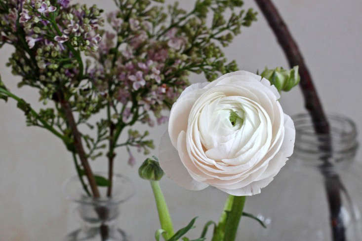white ranunculus, photo by justine hand 9