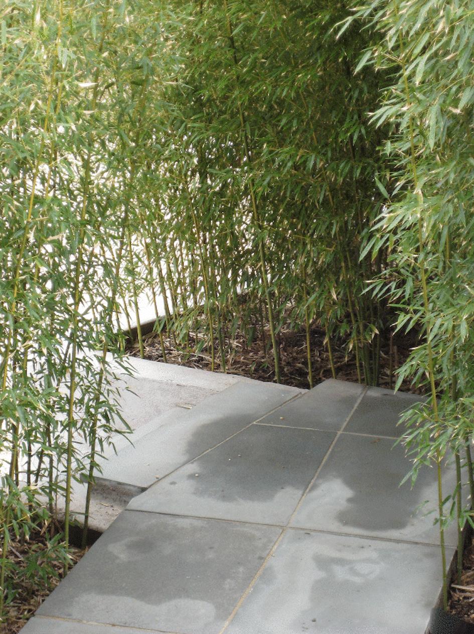 bamboo near path we design 12