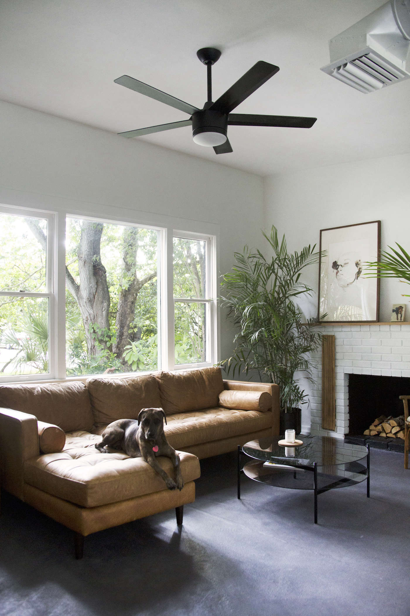 brown-leather-rectangular-couch-in-florida-with-dog