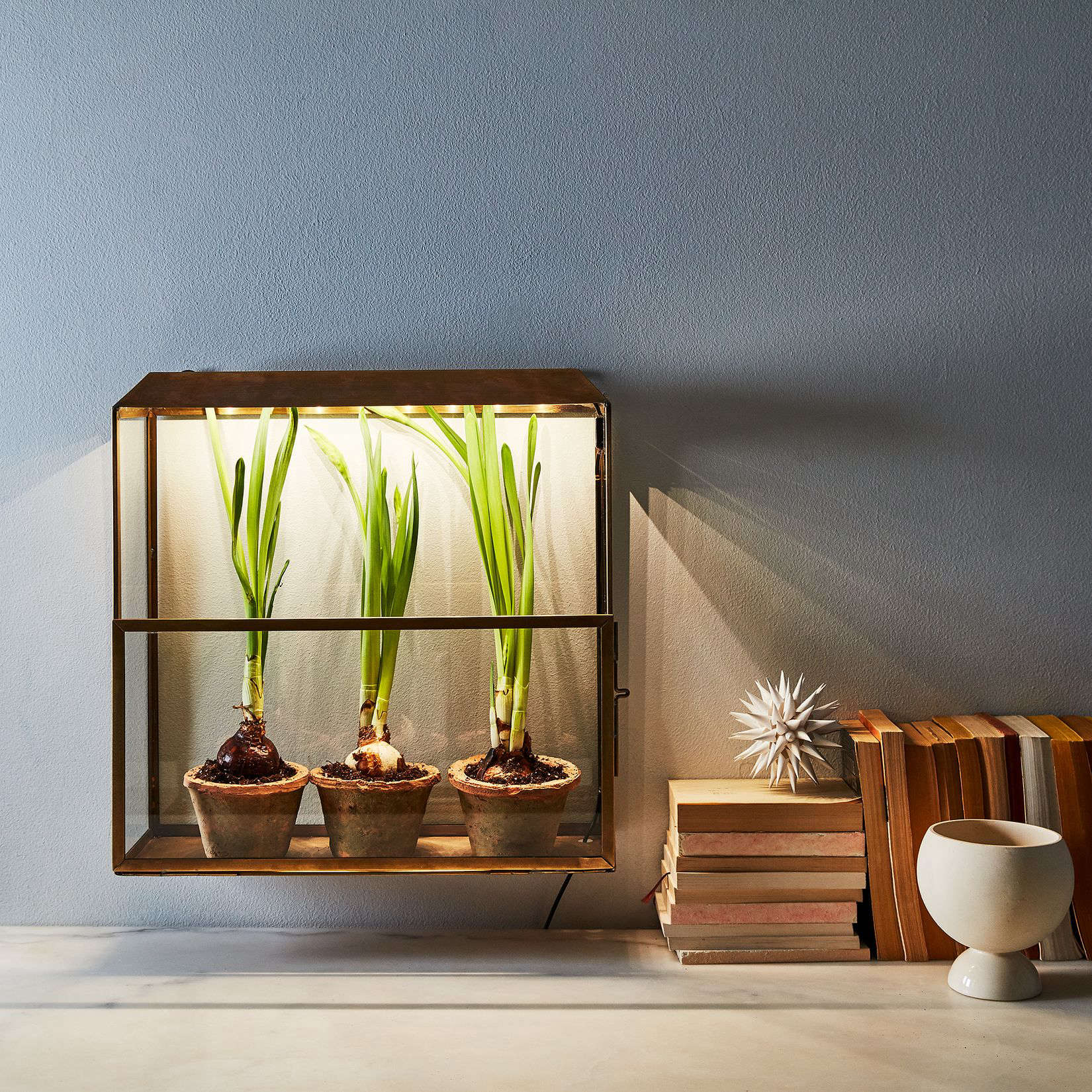 Indoor Greenhouse
