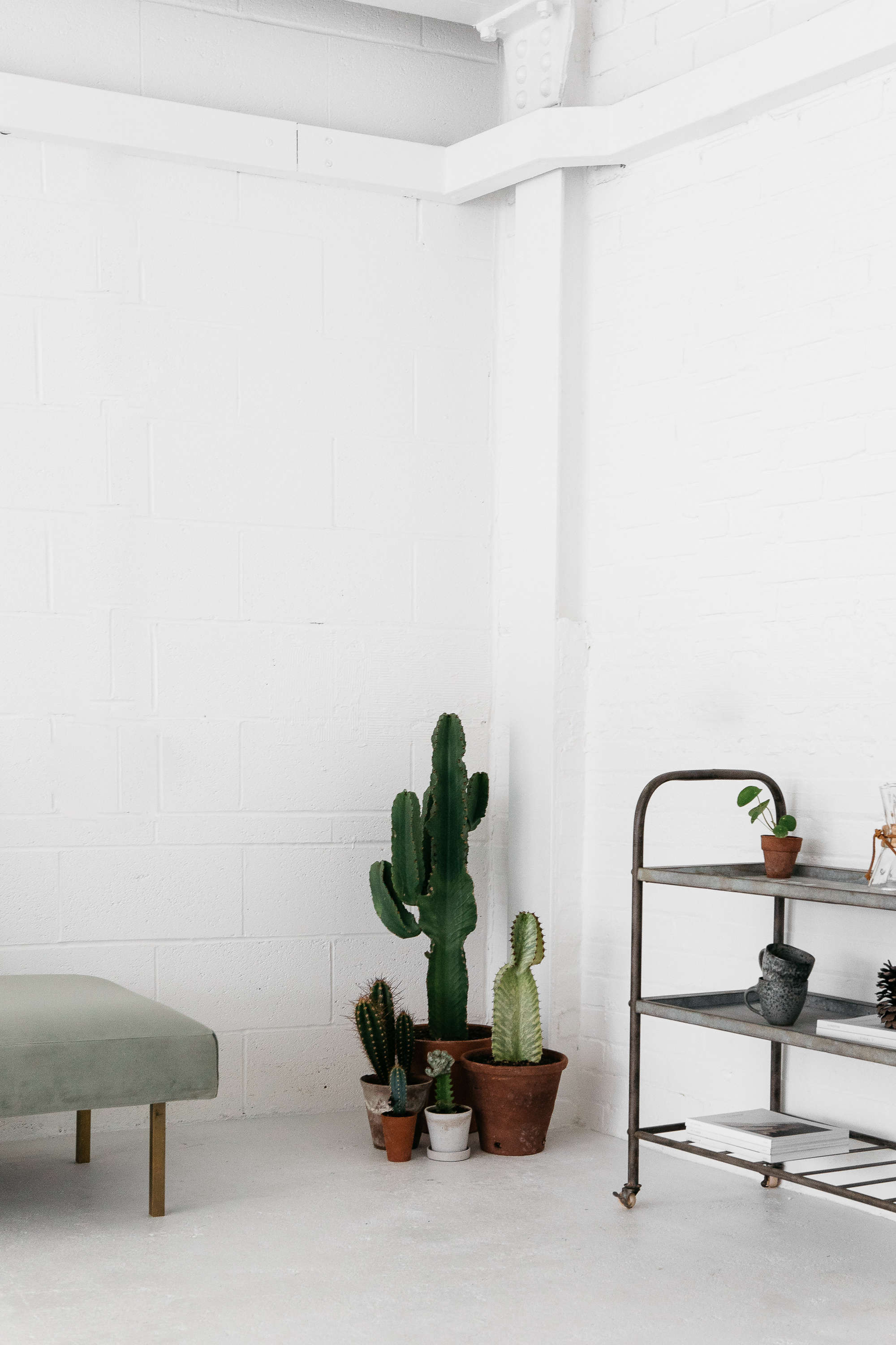 rye london cacti and other greenery in an all white scandinavian kitchen 24