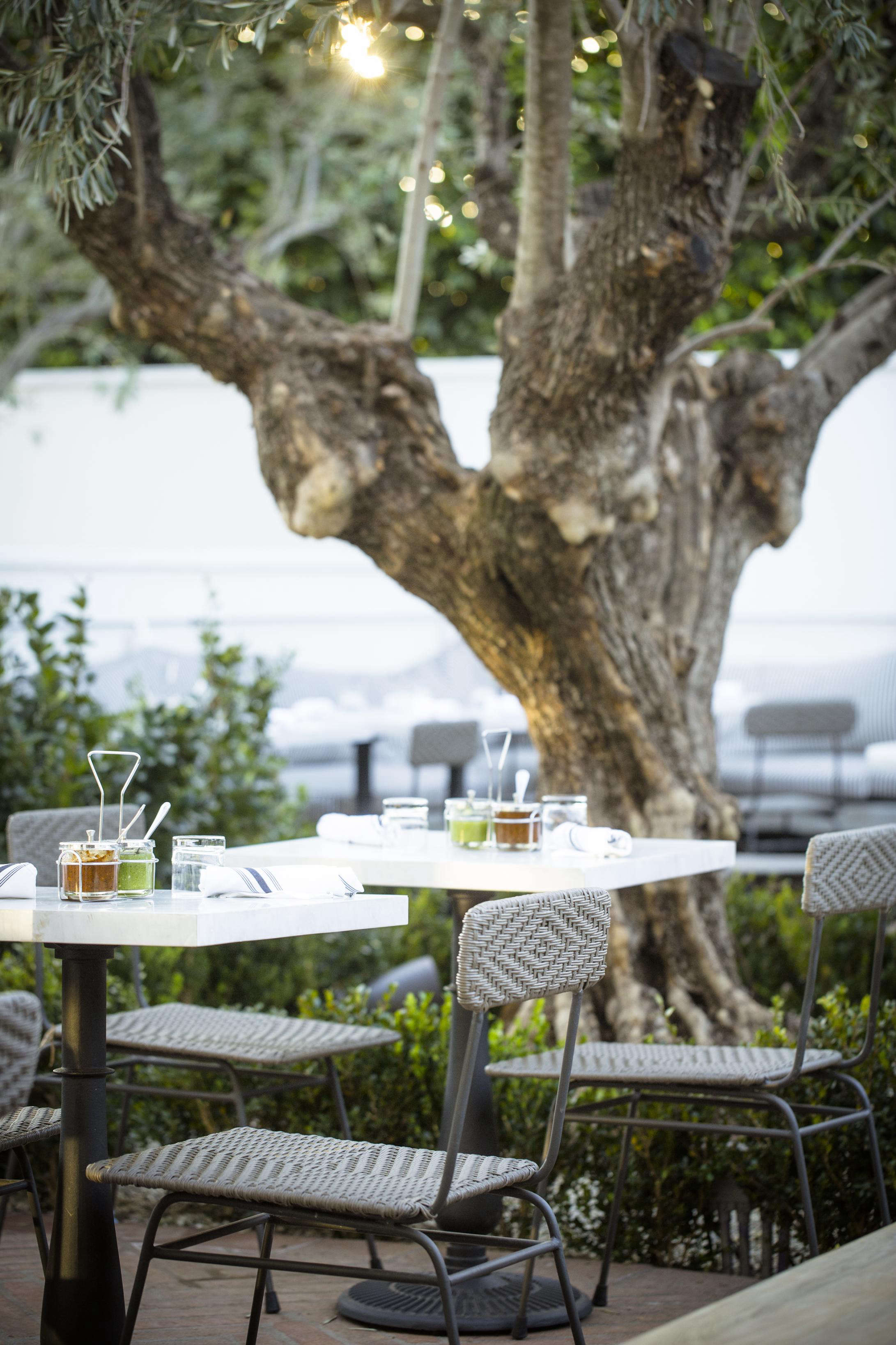 gracias-madre-back-patio-olive-tree-west-hollywood