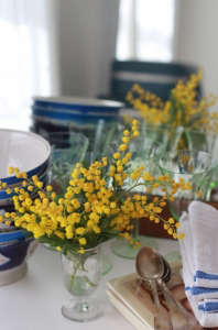 mimosa yellow flowers, photo by marie viljoen 10