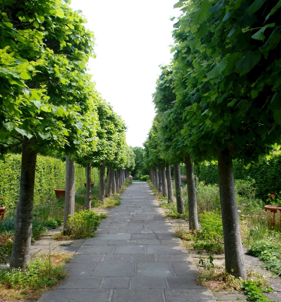 sissinghurst lime walk pleached trees phil bartle flickr 13