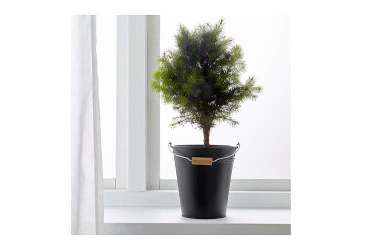 socker plant bucket ikea 10