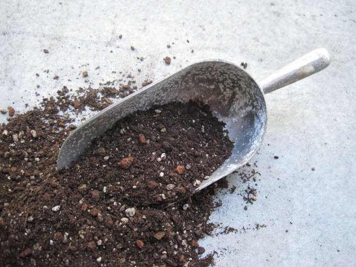 Prepare for the fertile season with Dirty Secrets:  Ways to Improve Garden Soil.