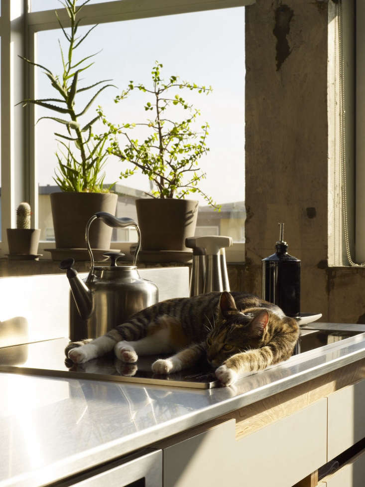 one of the couple&#8\2\17;s two cats gets some sun on the miele induction c 14