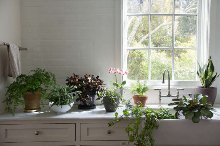 tried and tested: we scoped out 9 indoor plants for low light—sure to thrive  10