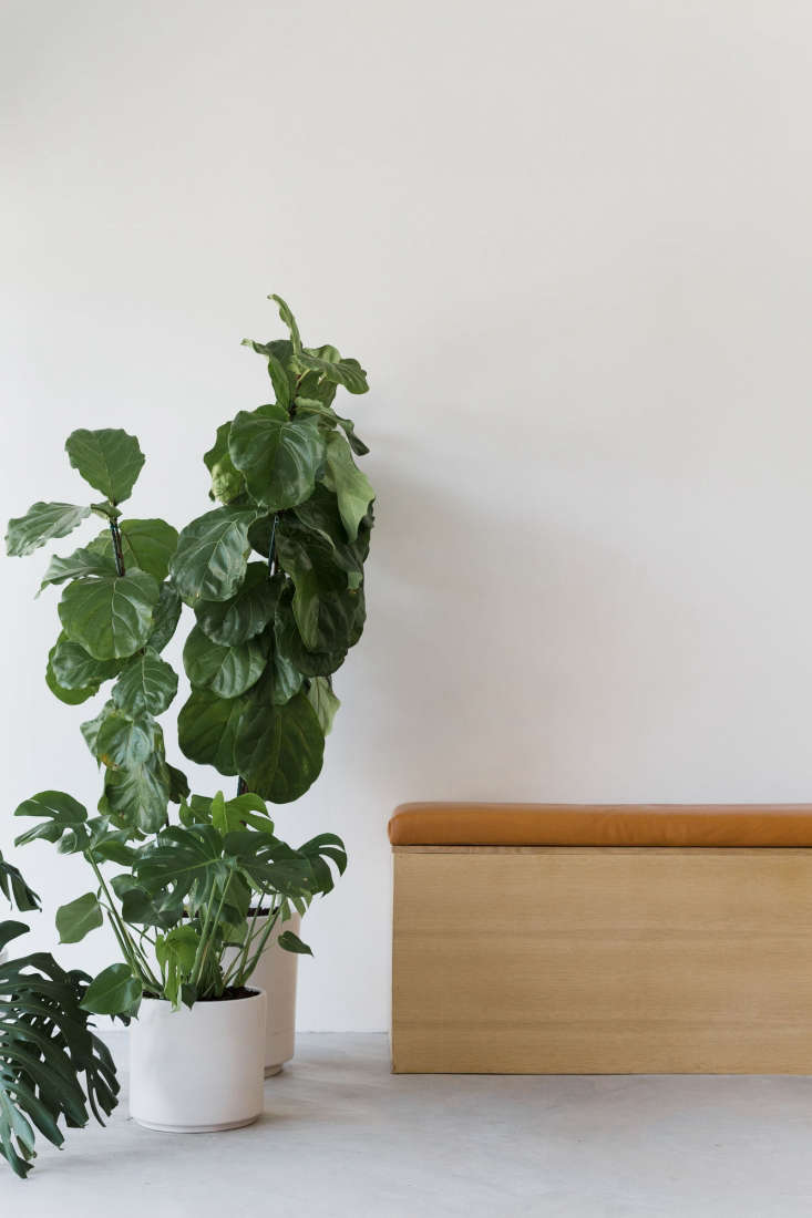 houseplants, happy in the light filled shop, in ceramic white planters by norde 17