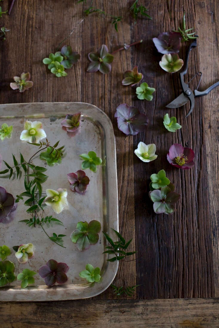 we love the moodiness of dainty hellebores, but these flowers areinfamous for 12