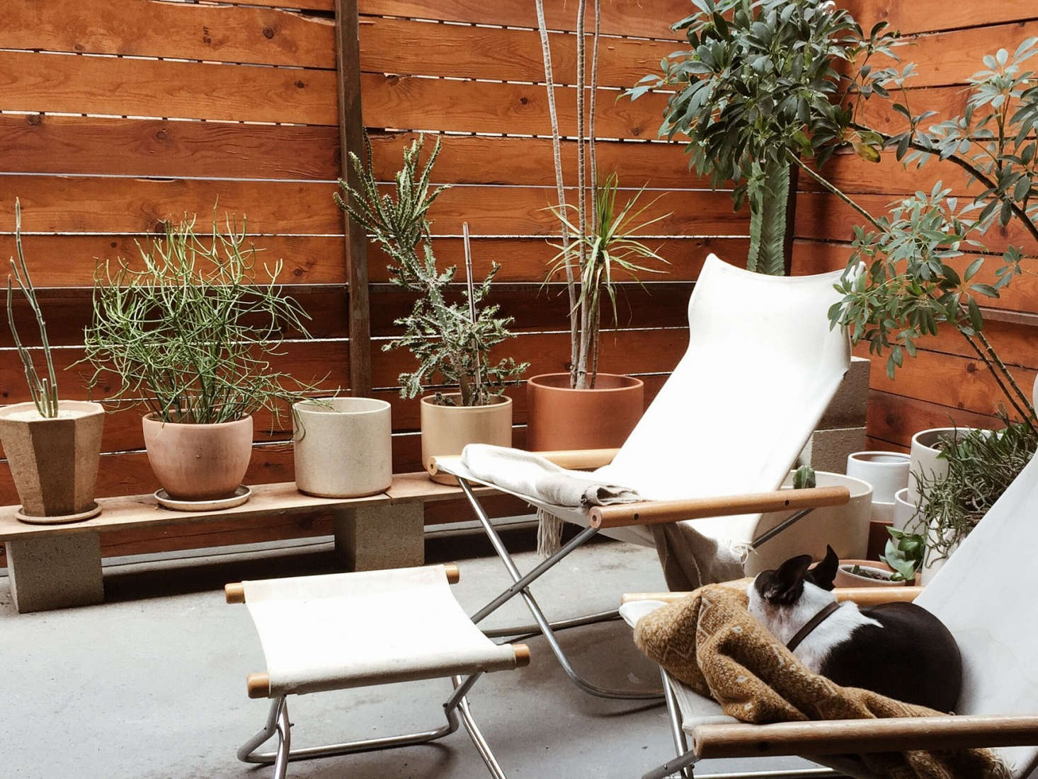 On their outside patio, appropriately adorned with drought-tolerant plants, a pair of Ny Rocking Chairs provide seating for humans and dogs.