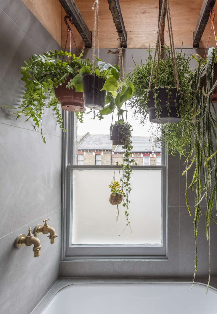 Ferns, succulents, and other moisture-loving plants hang from theexisting ceiling joists in the inner sanctum. Explain Astridge, &#8