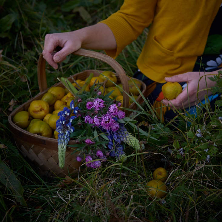 German-born Juliane Strittmatter collects flowers from her farm in Hässleholm every day from May through October and documents them, along with fruit and vegetables collected (shown here are fresh quince, on Instagram.