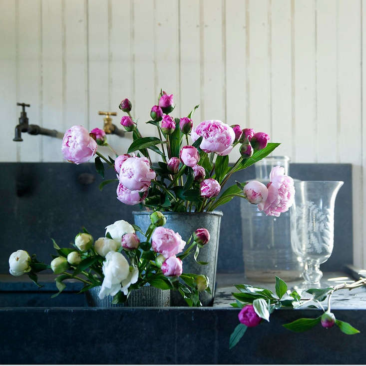 just in time for mother&#8\2\17;s day: where to sourceher favorite flower 10
