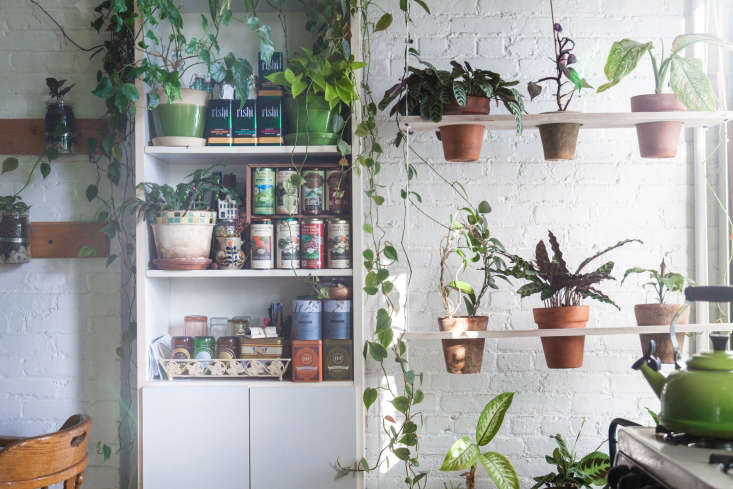 inliving with houseplants: four years later in a brooklyn apartment,gardeni 10