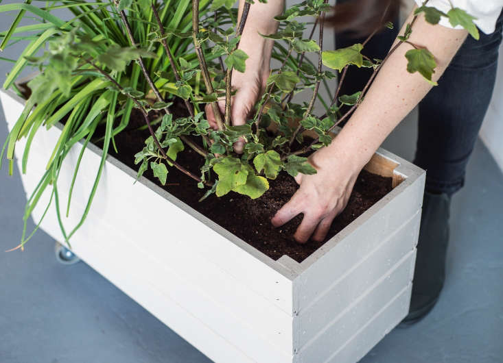 Trending on Gardenista Holiday Weekend The perfect project for a summer holiday weekend? Container Gardening: A DIY Planter on Wheels (aperennial favorite from the Gardenista book).