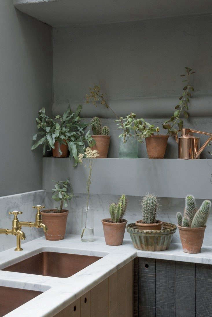 Two shelves of houseplants—mostly succulents—in a kitchen designed by deVol.