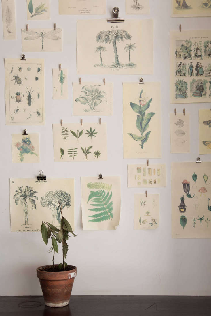 Clipped to one wall: avignette of botanical prints, designed by Vanessa Grall of Messy Nessy.