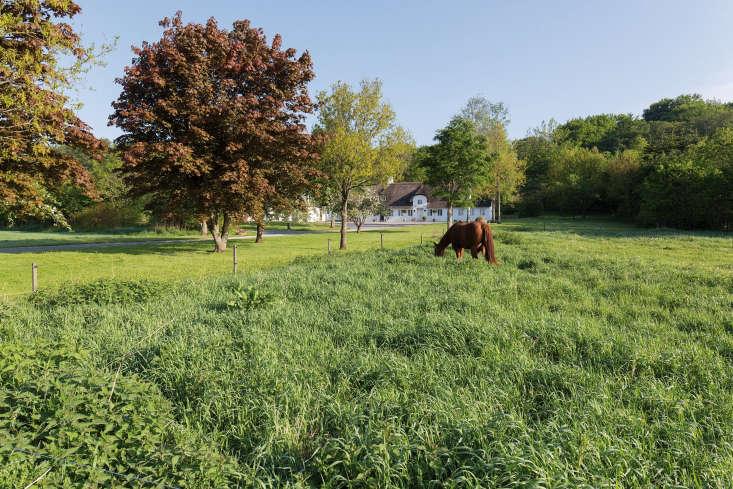 A bucolic scene in the Danish countryside.