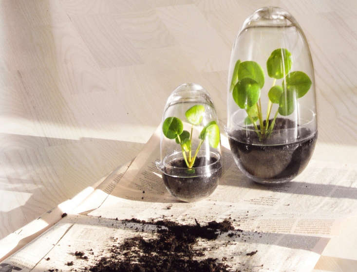 """""""a greenhouse for nature's smallest flowers, and a nursery for the plant� 10"""
