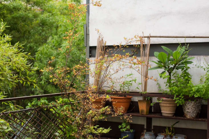 secrets of a small space garden, french edition: seehow to garden like a fren 12