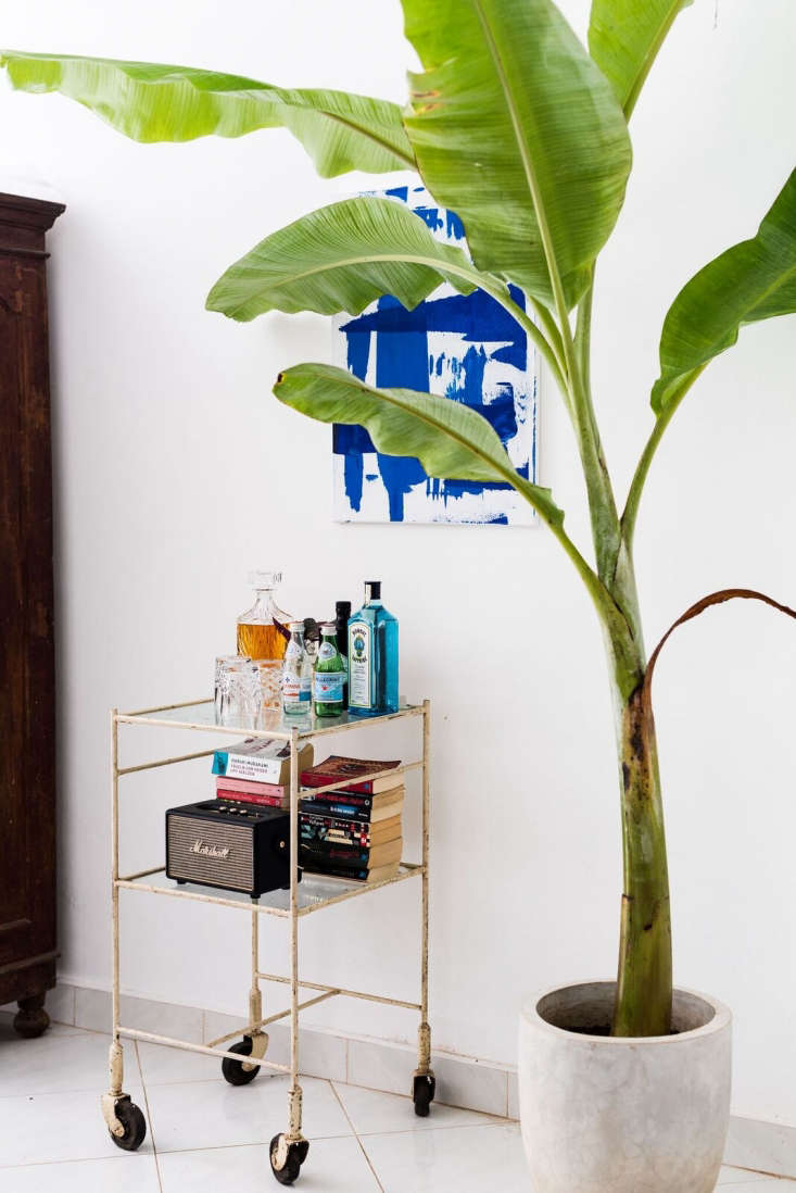 Next to a banana palm, a vintage hospital table found (and purchased) at a junkyard serves as a drinks cart. &#8