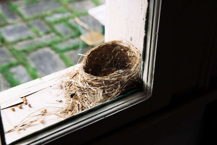 a room with a closeup view. &#8\2\20;a bat also lived in that window during 22