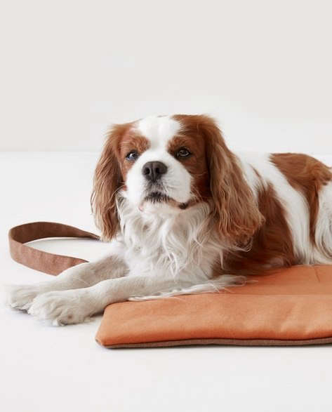 water repellent dog travel bag in rust by patti furry 9