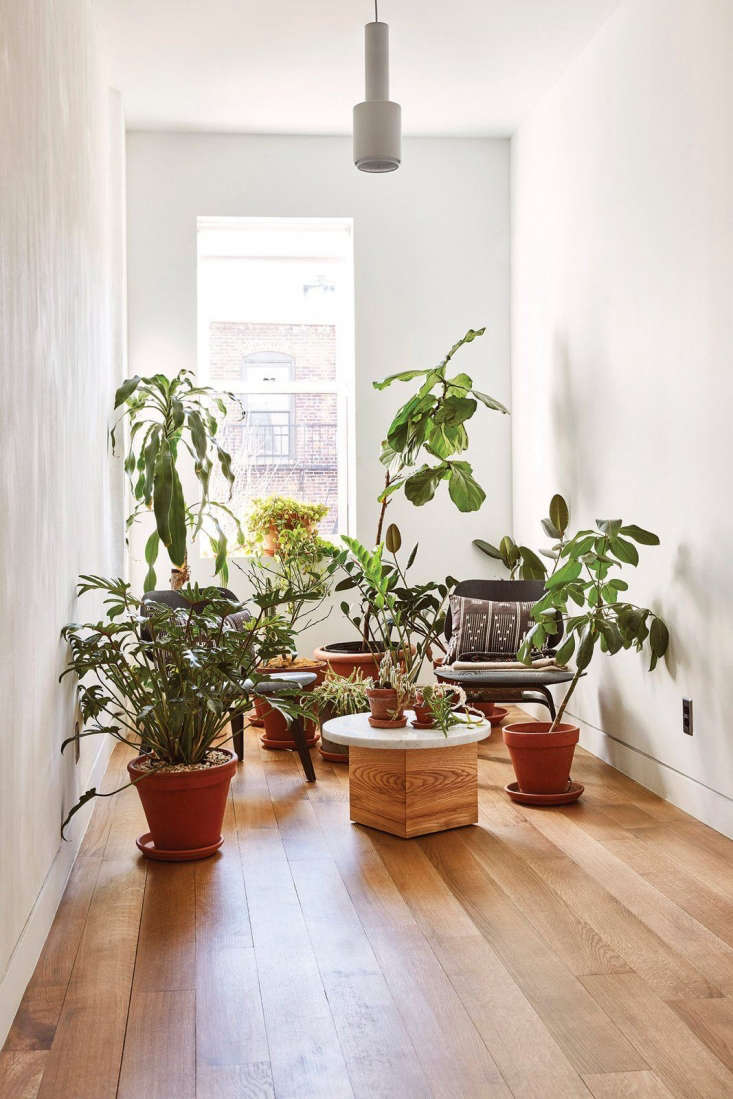 The alcove opposite the reading nook houses a jungle of potted plants. The floors here and throughout the house are white oak.