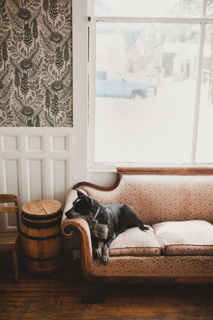 This is a community bar: A resident dog keeps warm on the settee. Photograph by Anna Boardman.